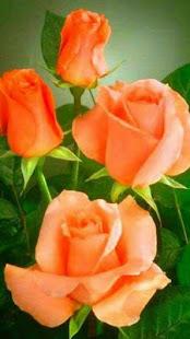 鮮花和玫瑰動畫圖像Gif圖片4K