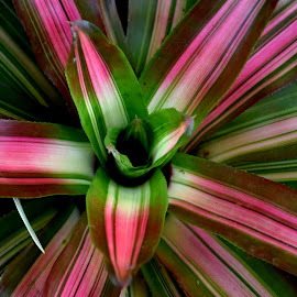 BI COLOURED by SANGEETA MENA  - Nature Up Close Leaves & Grasses
