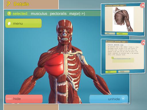 Easy Anatomy 3D(learn anatomy) APK download   APKPure.co