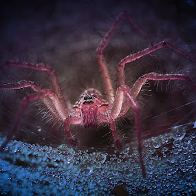 Menatapmu..... by Wewey Cheptady - Animals Insects & Spiders
