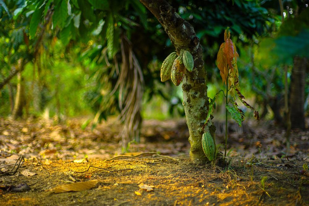 Sombra é um elemento importante para as árvores novas. (Fonte: Raditya/Shutterstock)