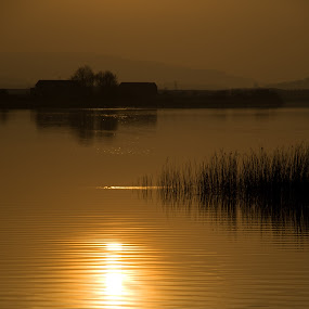 Golden Ripples by Jon Marshall - Landscapes Waterscapes ( nikon )