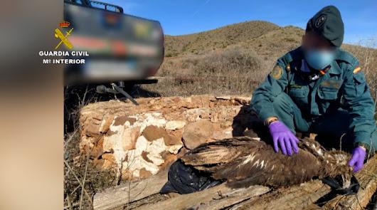 Más de 300 personas detenidas por caza furtiva y envenenamiento de animales