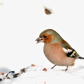 by Helen Beatrice - Animals Birds (  )