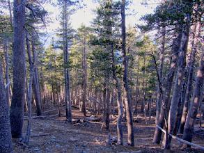 Photo: Descending north on North Backbone Trail from Pine Mt.
