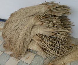 Photo: Paja toquilla, the raw material, grows on the Ecuador coast and is brought here to be worked