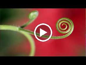 Video: A. Vivaldi  Alla caccia dell'alme e de' cori [cantata] for alto   b.c. (RV 670) -