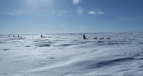 Arctic Canada Inuvik Winter Camping Tundra Dog Sledding // Sledding across a frozen lake