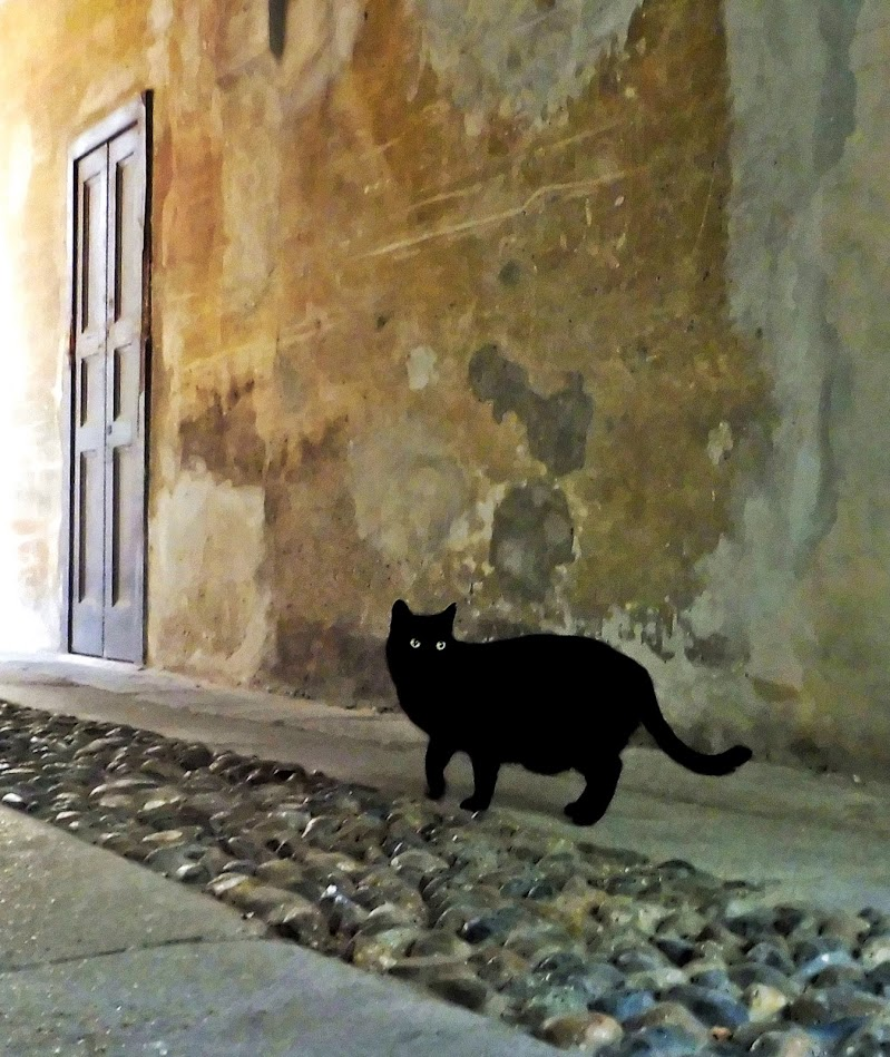 The black cat di roberto_p