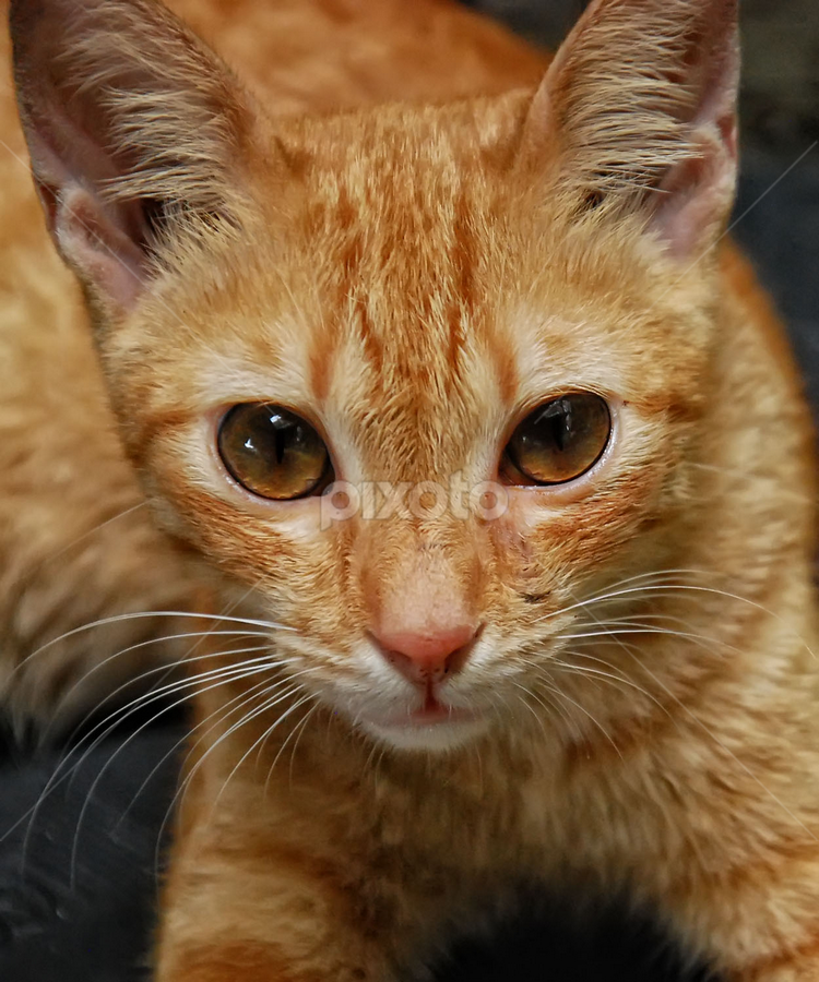 by Emil Zion Punzalan - Animals - Cats Portraits