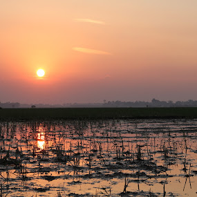 fields sunset by Syahbuddin Nurdiyana - Landscapes Sunsets & Sunrises