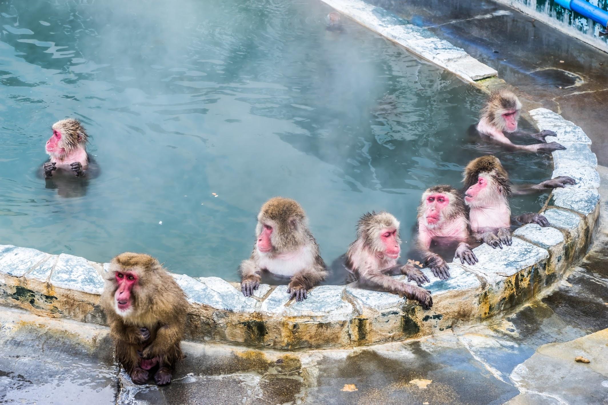 函館市熱帯植物園 サル 温泉2