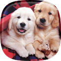 Puppies Live Wallpaper 🐶 Cute Puppy Pictures icon