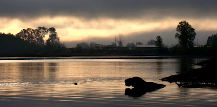 Photo: Yep.. a beaver picture. Taken early in the morning from the bank of the Fraser River. Also that log kind of looks like a hippo ;)