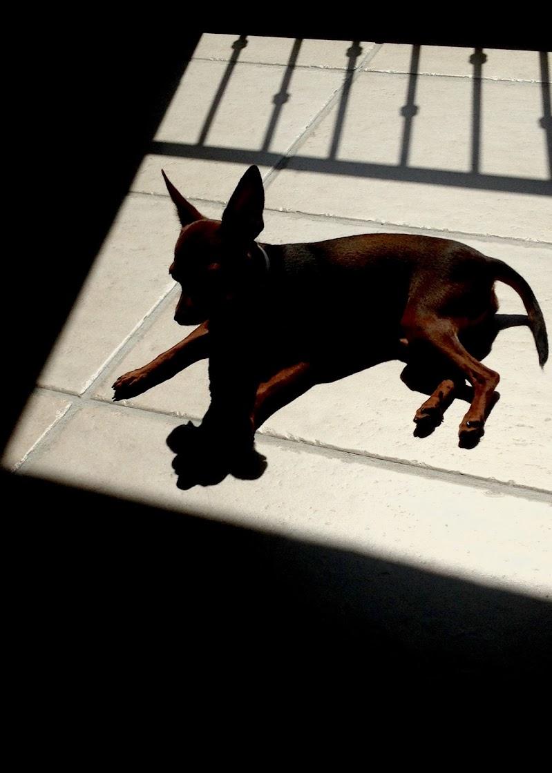 Gioco di ombre: Polly di Arianna Marini