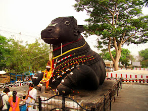 Photo: #219-Mysore, le Nandi de Chamundi Hill