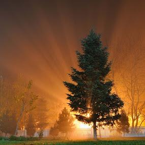 misty night by Ion Alexandra - Landscapes Starscapes ( foggy night, light, mist, night, lights )