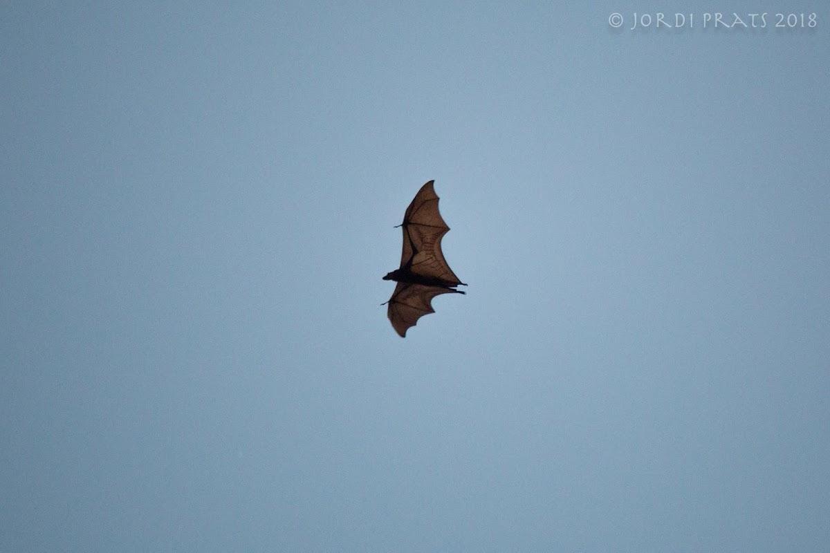 Sunda Flying Fox
