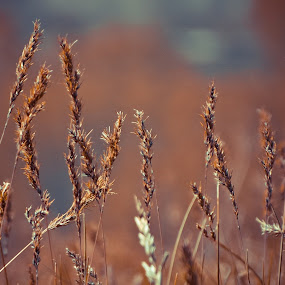 *** by Yasin Akbaş - Nature Up Close Leaves & Grasses ( s2950 )