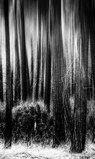 The Lonely Woods LWP