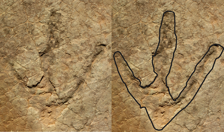 One of the therapod's footprints.