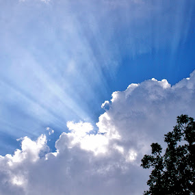 Sunburst by Ty Shults - Landscapes Cloud Formations ( ray, tree, blue, color, white, cloud, burst, sun )
