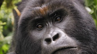 Battle for Virunga