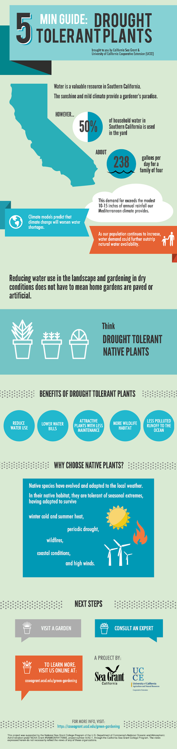 infographic: 5 min guide to drought tolerant plants