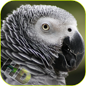 Parrots Video Live Wallpaper