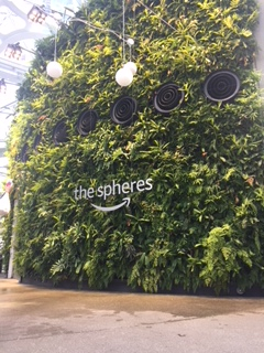 View of the inside of Amazon spheres
