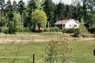 Photo: Tallskogen 2000