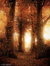 Photo: Come Walk With Me  Come walk with me. And we shall kick up autumn leaves. In harmonies of gold and red. And a crinkle melody. Come walk with me. And breathe the morning air. And the rising sun shall warm our hearts. And glitter through the canopy.  That moment of dawn, when the world begins to wake and you find yourself somewhere magical is beyond compare, this is a little path that runs through the back of a small hamlet called Great Budworth, it consists of a church, a pub, a school and about three streets of houses, some over 300 years old. The path was planted a few hundred years ago and is now a tunnel of trees and leaves, its a beautiful place to be in autumn.