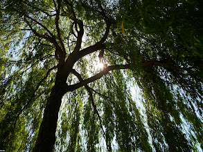Photo: Find a cool spot in this heat? for #treetuesday curated by +Christina Lawrie and +Shannon S. Myers