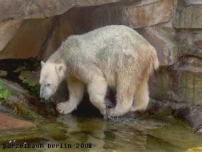Photo: Knut bei der Poolumrundung ;-)