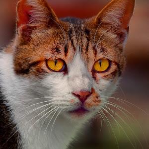 March 23 cat 3.jpg