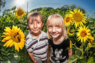 """Photo: Happy Sunflowers  Few weeks ago we stopped by at local sunflower field. Kids had fun, we grabbed a nicebouquet of sunflowers and left $5 in the box full of dollars (it was one of those """"serve yourself"""" type of farms). I had my """"special"""" fisheye portrait lens and snapped quite unusual andcolorfulshots. This is one of them. Sun was in front of me, flash was working hard and overpowered everything. Post production was very close to what we have on this tutorial, in case you interested: http://goo.gl/guLi4  Enjoy the life like these kids!"""