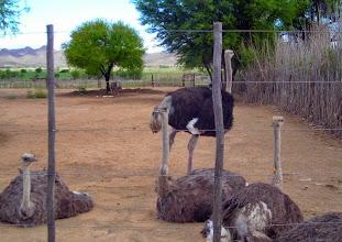 Photo: At the ostrich farm