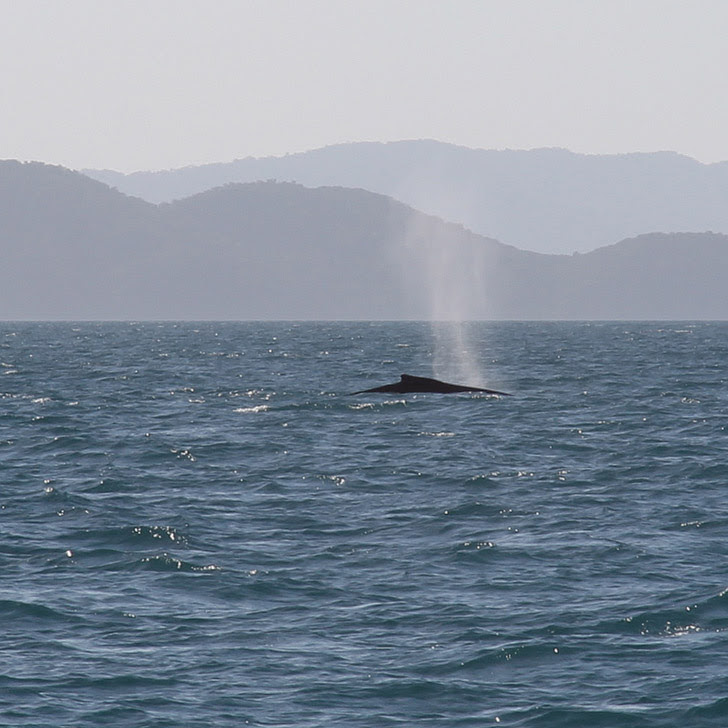 Long Island Whale Watching by Season + A Guide to When and Where to Whale Watch in the US.