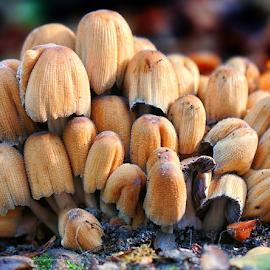 by Ad Spruijt - Nature Up Close Mushrooms & Fungi (  )