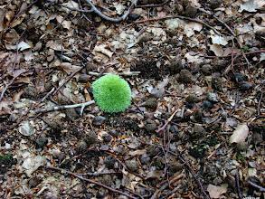 Photo: Grzybki trawiaste