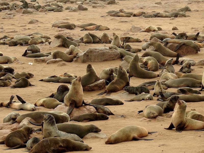 Wildlife di donnavventura