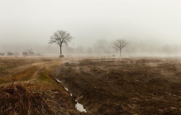 La nebbia è silenzio di Barbara Surimi