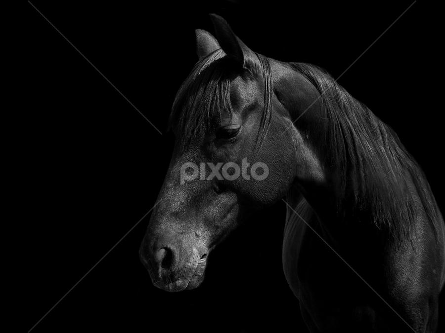 Mama by Goran Kalanj - Animals Horses