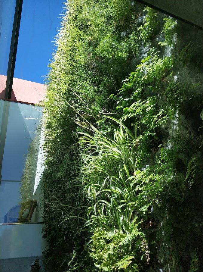 Estado del jardín vertical de San Juan de Alicante