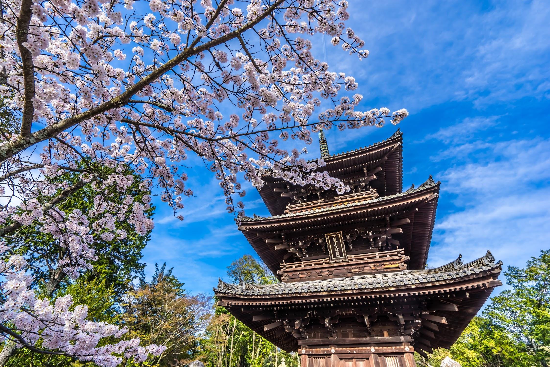 京都 金戒光明寺 三重塔 桜