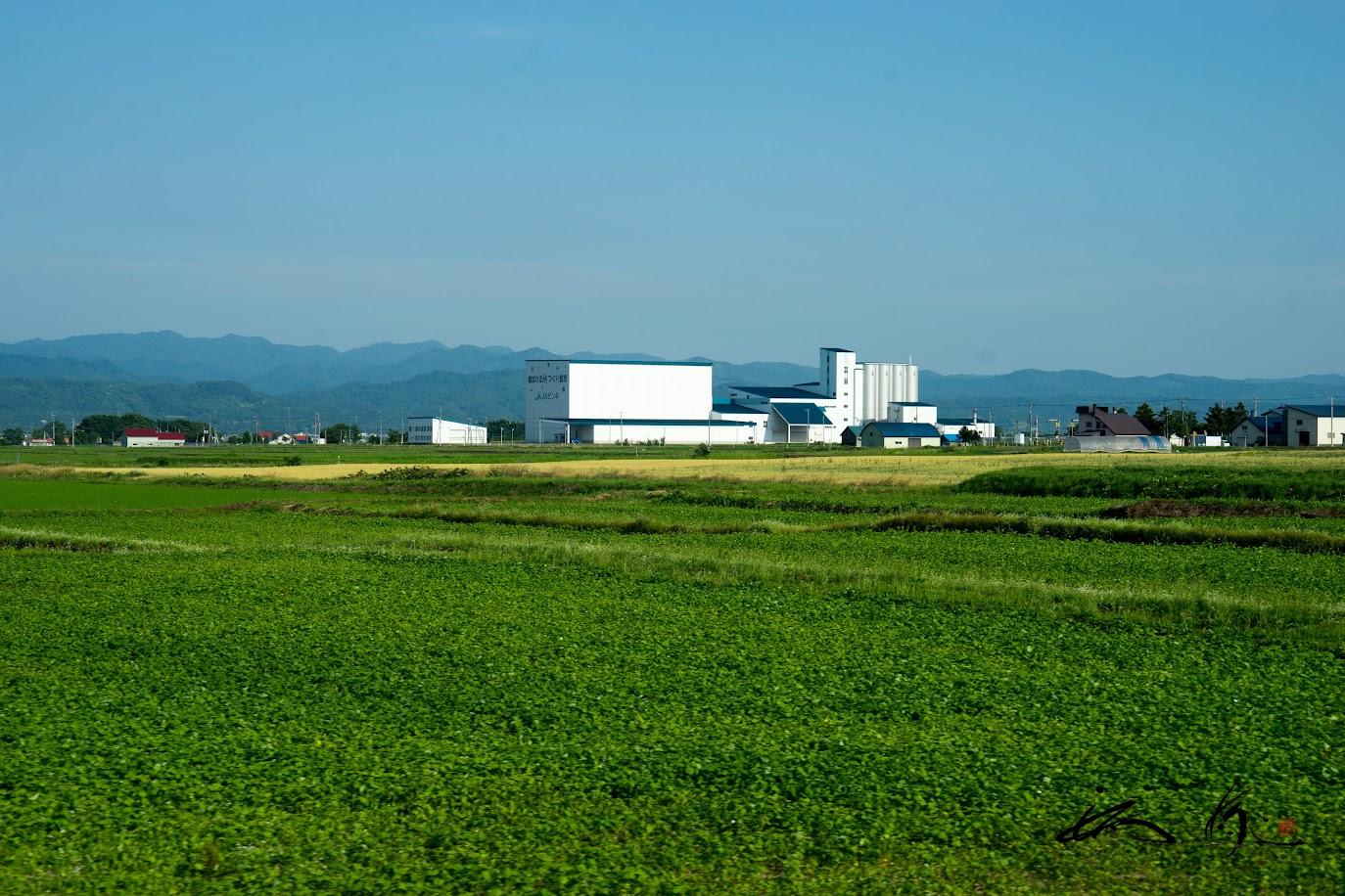 田んぼからピンネ農協・中心蔵ライスターミナルを望む風景