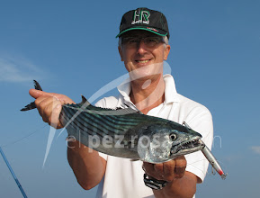 Photo: Seashot Minnow y Bonito