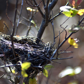 Empty Nest Syndrome  by Chandal Chenier - Nature Up Close Hives & Nests ( leaves, bird, nest, autumn )