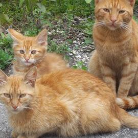 Котки by Georgi Kolev - Animals - Cats Kittens ( треви., котки., път., ден., светлина. )