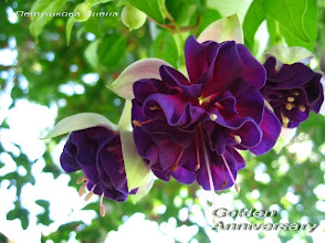 Photo: Golden Anniversary